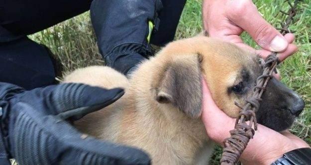 Tellere sıkışan yavru köpek itfaiye tarafından kurtarıldı