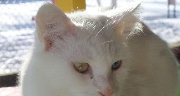 Van kedileri kış güneşinin tadını çıkarttı