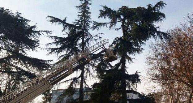 Trabzon'da kar sonrası zarar gören ağaçlar budanıyor