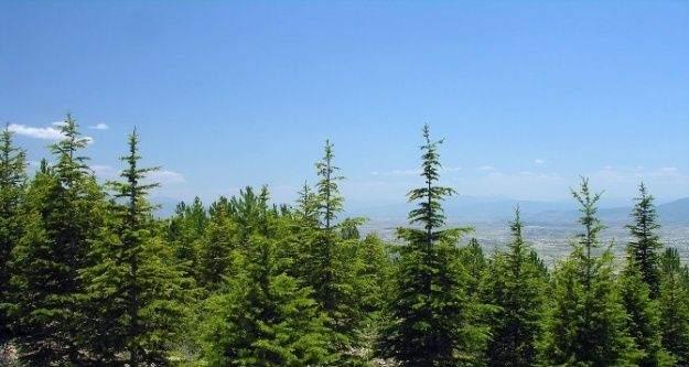 Yozgat'ta 70 milyon 538 bin fidan toprakla buluştu