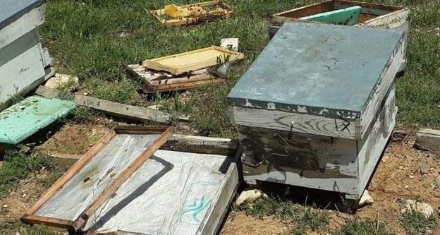 Sarıveliler'de ayı, arı kovanlarına zarar verdi