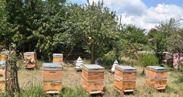 Bal ve üzüm yetiştiriciliği projeleri meyvelerini vermeye başladı