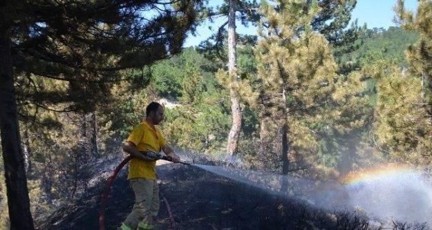 (Özel Haber) Kargı'da Orman Yangını