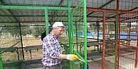 Burhaniye'de köpek barınağı genişletiliyor