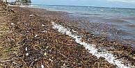 Burhaniye'de selin getirdiği çöpler denizi kirletti