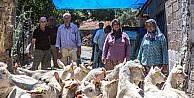Orman köylülerine keçi desteği